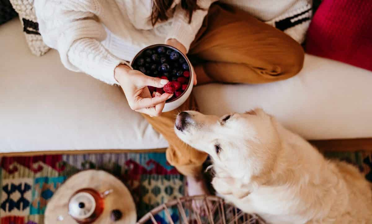 feeding fruits to dogs