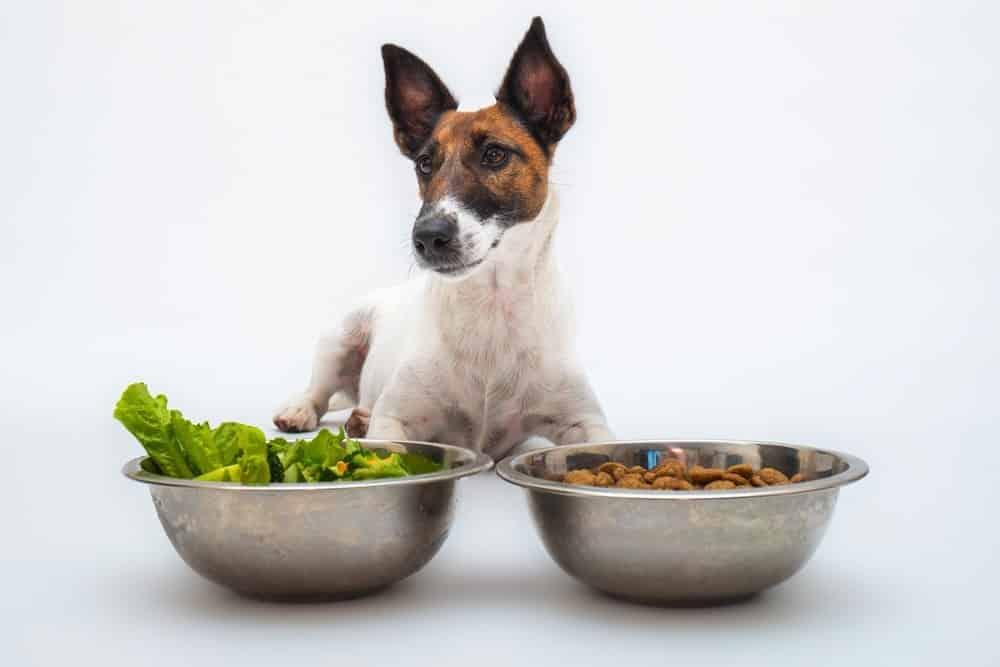 guide to vegan dog food